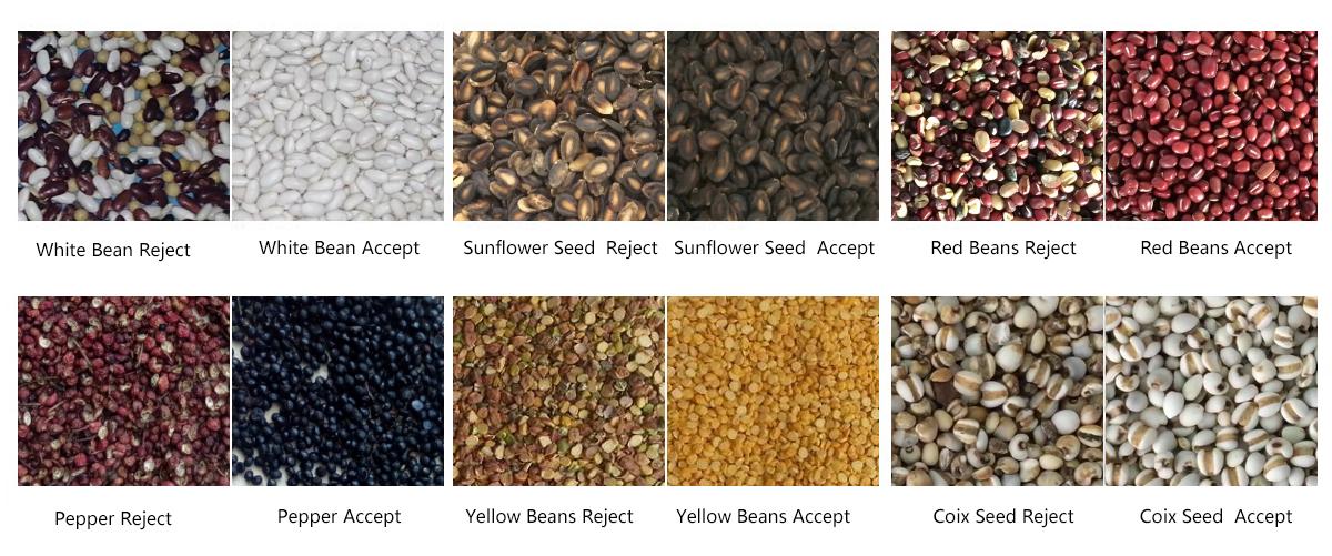 Corn optical sorting